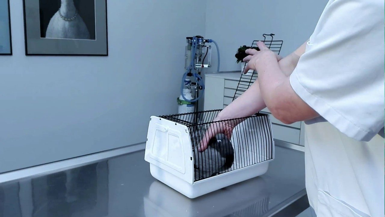 Tauben richtig einfangen-Taube in der Hand beim Tierarzt