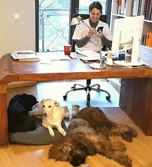 Büroarbeit-Dr.Fenske am Schreibtisch mit drei Hunden