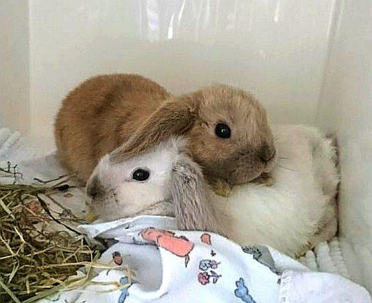 Zwei Kaninchen auf der Tierstation beim Tierarzt