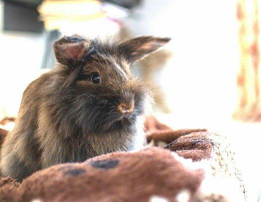 Kaninchenimpftag Kaninchen sitzt auf einem Handtuch
