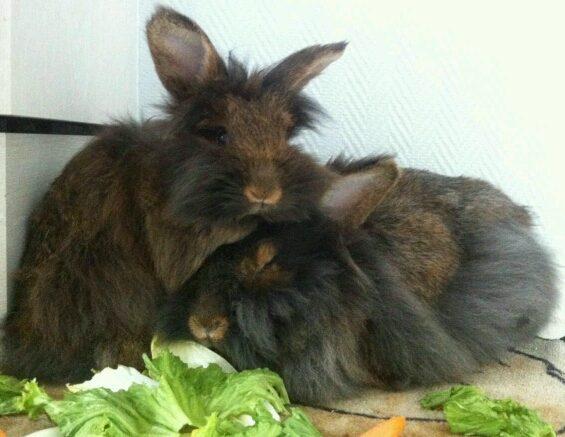 Zwei Kaninchen Tierarztbergedorf