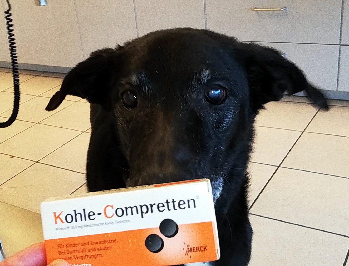 kohletabletten für hunde